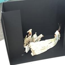 CYSM Model Box Initial Presentation - 2
